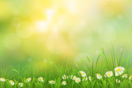 Illustration pour Spring nature background with green grass and chamomiles - image libre de droit
