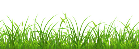 Illustration pour Seamless fresh green grass on white background - image libre de droit
