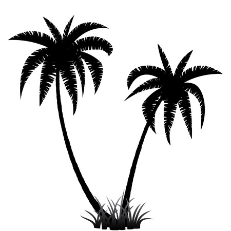 Illustration for Palm trees silhouette on white background, vector illustration - Royalty Free Image