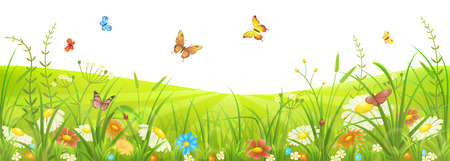 Illustration pour Floral summer or spring meadow with green grass, flowers and butterflies - image libre de droit