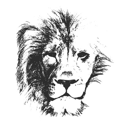 Illustration pour vector sketch style drawing of male lion face - image libre de droit
