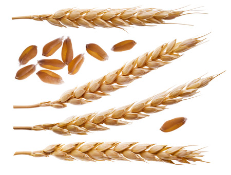 Foto de Spikelets and wheat seeds isolated on white - Imagen libre de derechos