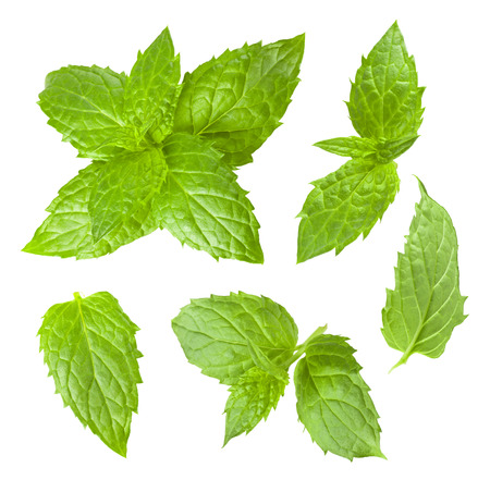 Photo for Collection of mint leaves isolated on white background - Royalty Free Image