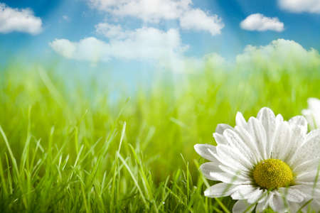 Photo pour Nature background - flower on green field and blue sky - image libre de droit