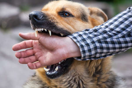 Foto de A male German shepherd bites a man by the hand. - Imagen libre de derechos