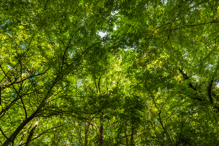 Photo for Bright sunlight shines through the green forest trees - Royalty Free Image