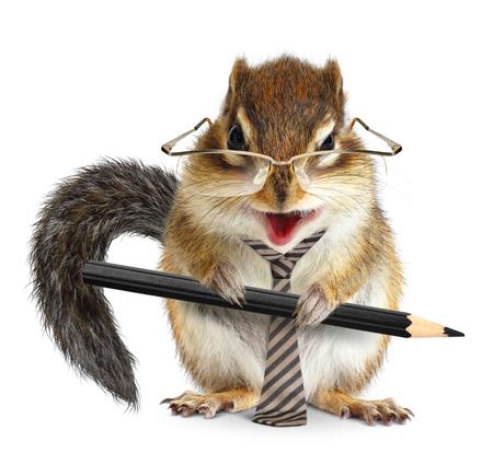 Photo pour animal businessman, chipmunk with tie and pencil  - image libre de droit