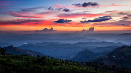 Photo for Panorama of sunset in mountains with tea plantations. Munnar, Kerala, India - Royalty Free Image