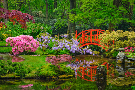 Photo for Japanese garden, Park Clingendael, The Hague, Netherlands - Royalty Free Image