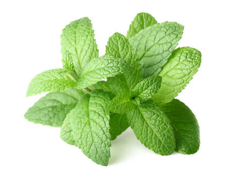 Peppermint in closeup