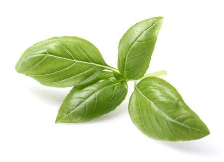 Photo pour Basil spice in closeup - image libre de droit
