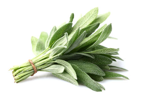 Foto de Sage plant on a white background - Imagen libre de derechos