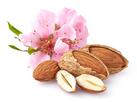 Photo for Almonds with flowers - Royalty Free Image
