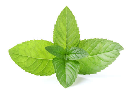 Photo for Mint leaves - Royalty Free Image