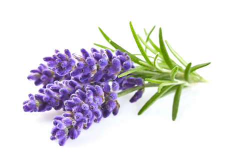 Photo for Lavender flowers - Royalty Free Image
