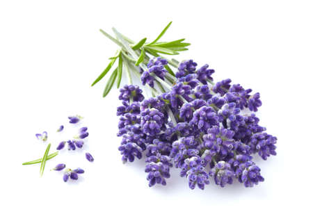 Photo pour Lavender flowers in closeup - image libre de droit