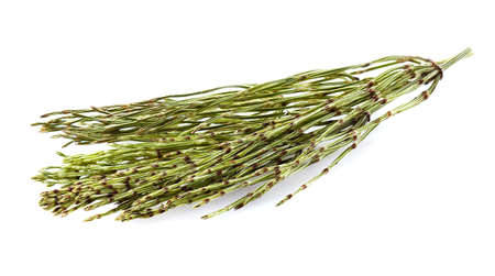 Photo for Dry horsetail on a white background - Royalty Free Image