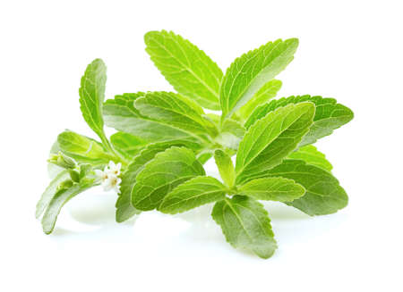 Photo for Stevia rebaudiana on white background - Royalty Free Image