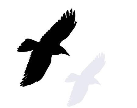 Illustration pour raven - image libre de droit