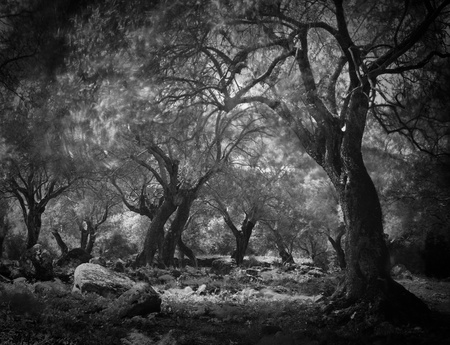 mysterious dark ghost forest, long exposure leads to blurry leafs. Spooky scary woods fantasy fairytale horror haloween trees
