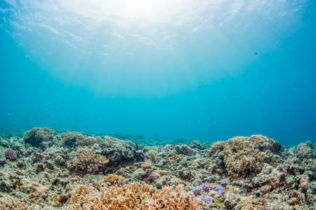 Photo for Coral Garden - Royalty Free Image
