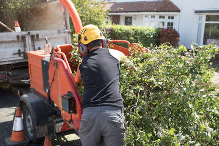 Foto per Male operative loading branches into an industrial wood chipping machine - Immagine Royalty Free