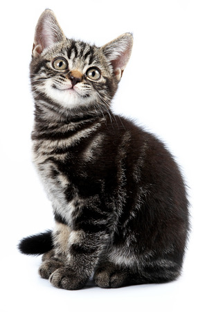 Foto de Funny striped kitten sitting and smiling (isolated on white) - Imagen libre de derechos