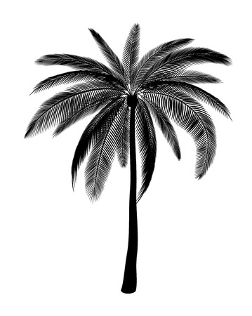 Illustration for Silhouette of single palm - Royalty Free Image