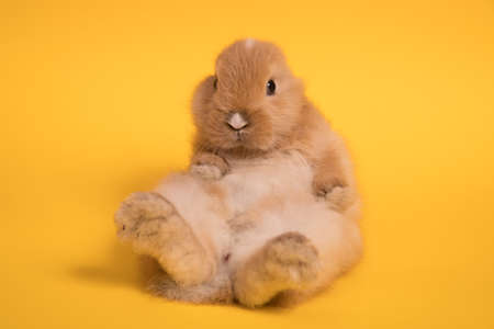 Photo for Small cute rabbit lying - Royalty Free Image