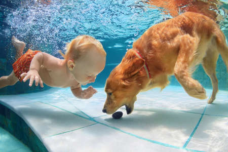 Photo pour Funny little child play with fun and train golden labrador retriever puppy in swimming pool, jump and dive deep down underwater. Active water games with family pets, popular dog breeds like companion. - image libre de droit