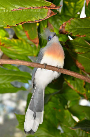 Beautiful colorful bird perched on a branch.