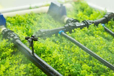 Photo pour Intelligent agriculture water spray - image libre de droit
