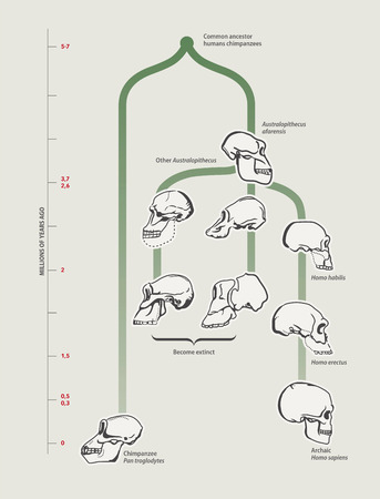Illustration pour Human evolution (skulls) - image libre de droit