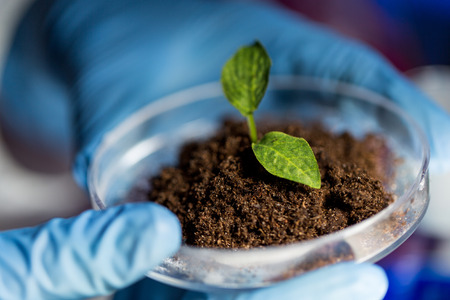 Foto de close up of scientist hands holding petri dish with plant and soil sample in bio laboratory - Imagen libre de derechos