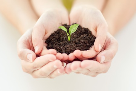 Foto de people, charity, family and ecology concept - close up of child and parent cupped hands holding soil with green sprout at home - Imagen libre de derechos