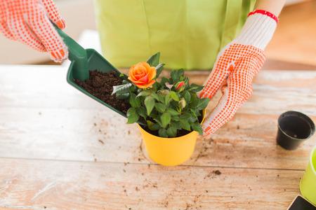 Foto de people gardening flower planting and profession concept  close up of woman or gardener hands planting roses to flower pot at home - Imagen libre de derechos
