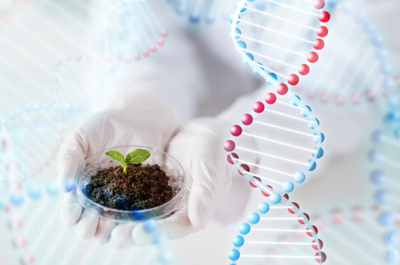 Photo pour science, biology, ecology, research and people concept - close up of scientist hands holding petri dish with plant sample in bio laboratory and dna molecule structure - image libre de droit