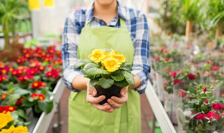 Foto de people, gardening and profession concept - close up of happy woman or gardener holding flowers at greenhouse or shop - Imagen libre de derechos