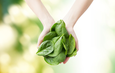 Photo pour healthy eating, dieting, vegetarian food and people concept - close up of woman hands holding spinach over green natural background - image libre de droit