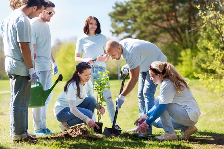Photo for volunteering, charity, people and ecology concept - group of happy volunteers planting tree and digging hole with shovel in park - Royalty Free Image