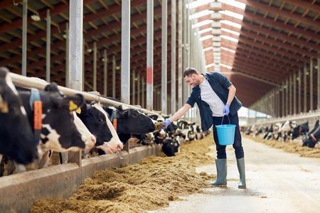 Foto de man feeding cows with hay in cowshed on dairy farm - Imagen libre de derechos