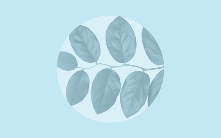 Foto de faded leaves over blue background - Imagen libre de derechos