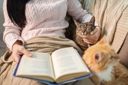 Photo pour red and tabby and owner reading book at home - image libre de droit