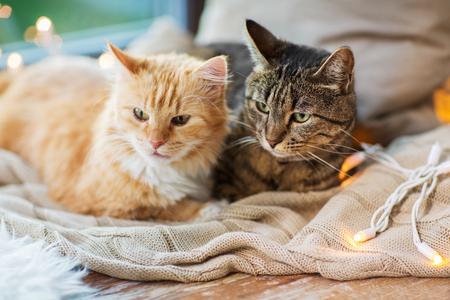 Foto de two cats lying on window sill with blanket at home - Imagen libre de derechos