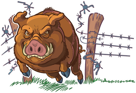 Illustrazione per Vector cartoon clip art illustration of a tough and mean pig or hog or wild boar mascot crashing through a barbed wire fence. Character and background are on separate layers. - Immagini Royalty Free