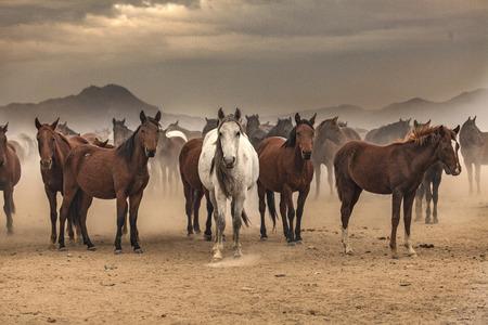 Photo pour Horses' posture - horses - image libre de droit