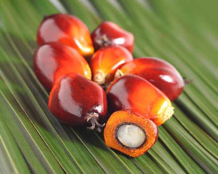 Photo pour Cut fresh oil palm fruits on the leaves background - image libre de droit