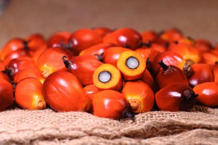 Photo pour A group of oil palm fruits on the sack bag - image libre de droit