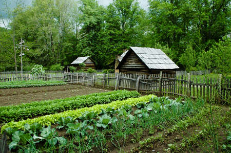 Vegetable Garden with gourd bird houses.