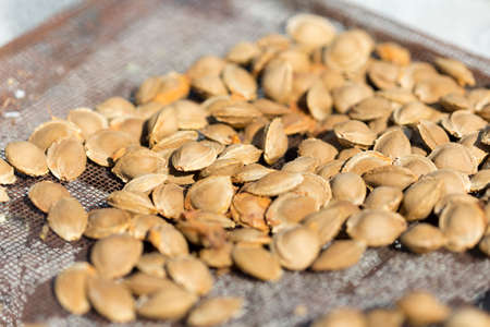 Photo for Dry fruit kernel of apricot to dry under the sun - Royalty Free Image